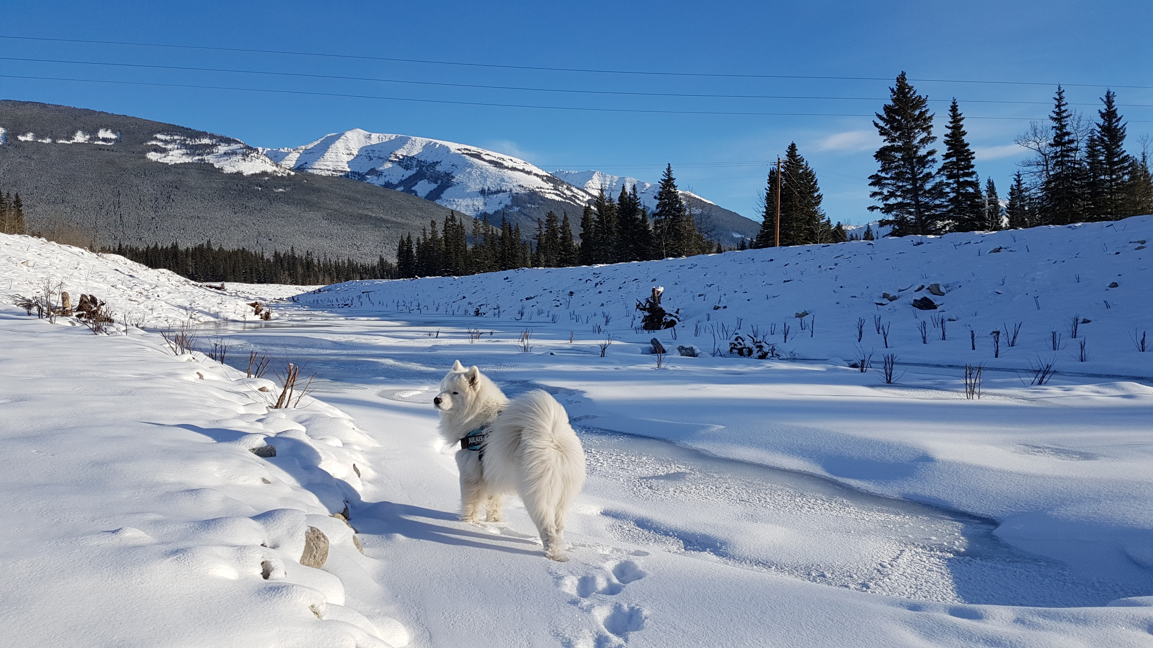 About Swedes' Hut Samoyeds